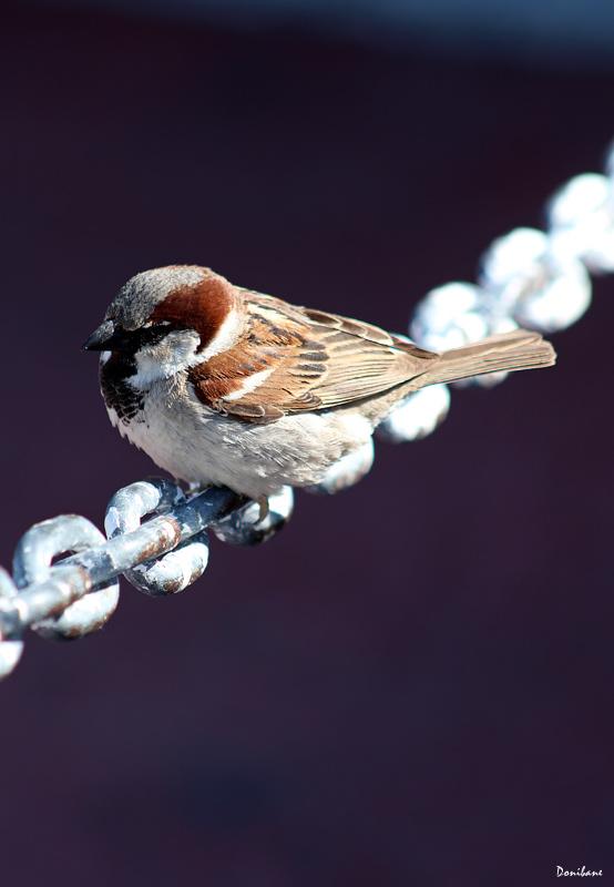 Pájaro en Porto Banus por Donibane