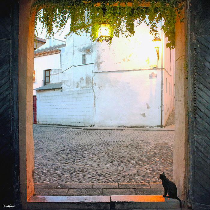 En la tarde noche de Ronda los gatos te reciben en la puerta, by Donibane