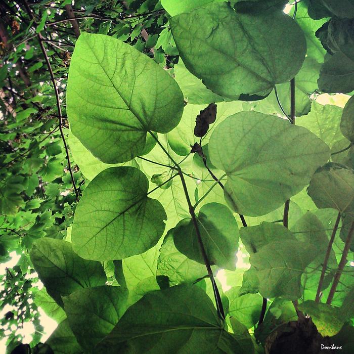 Las hojas de los árboles por Donibane