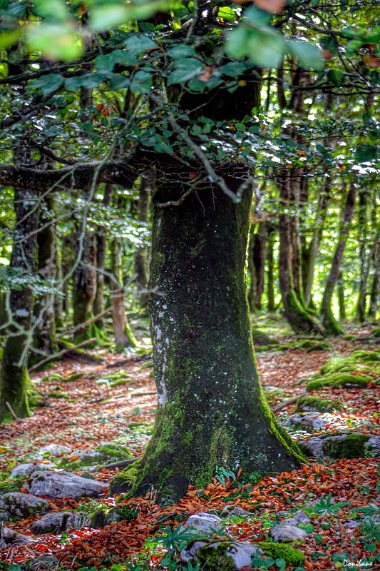 Los maravillosos bosques que tenemos en Bizkaia by Donibane