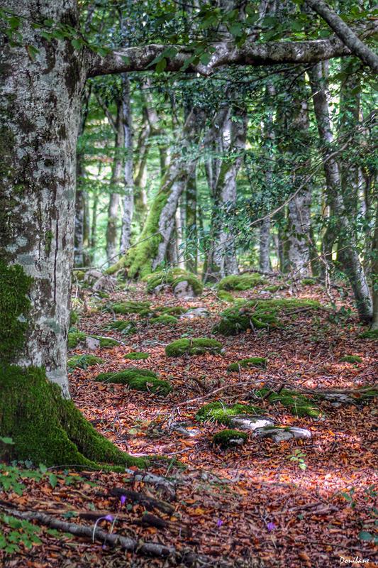 bosqueverde2