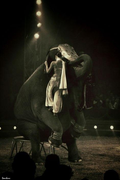 circo_elefantes