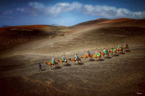 lanzarote-camellos-donibane